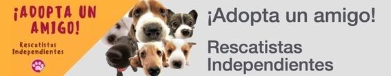 lugares adoptar perros ciudad de mexico perritos 3