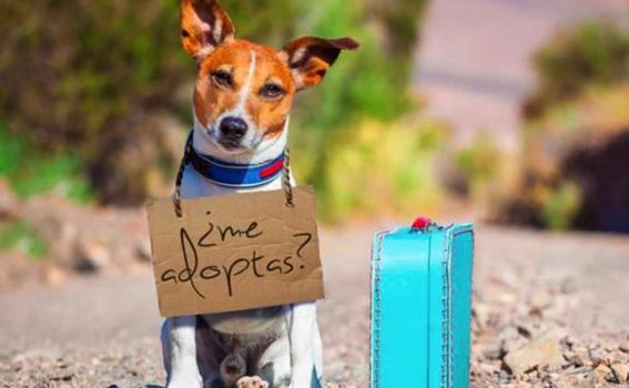 lugares adoptar perros ciudad de mexico perritos 1