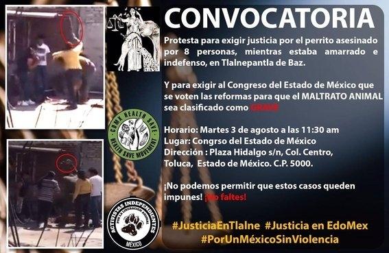 perro asesinado tlalnepantla fecha y hora marcha exigir justicia 2