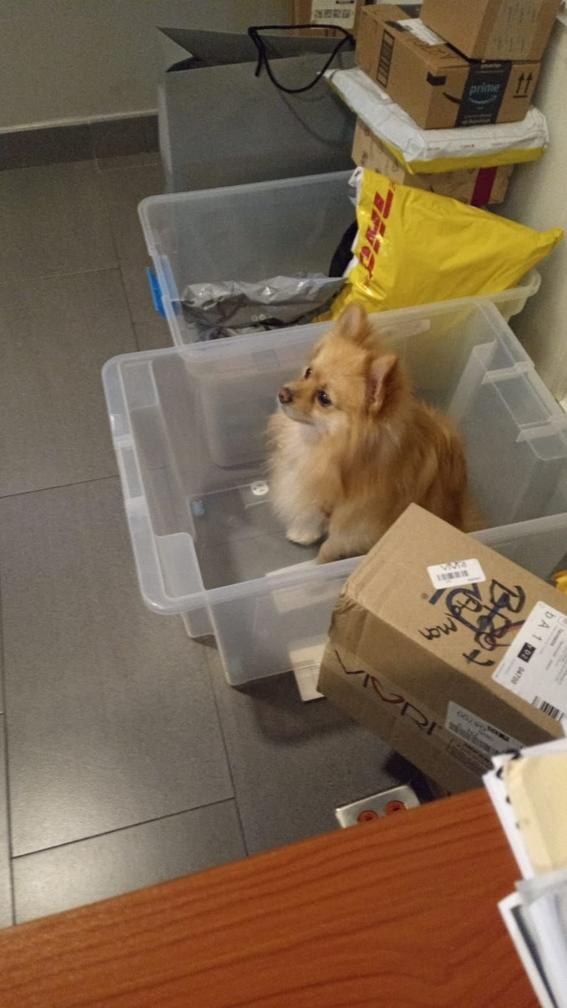 perro perdido objetos perdidos 1