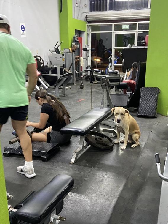 perro en el gym 1
