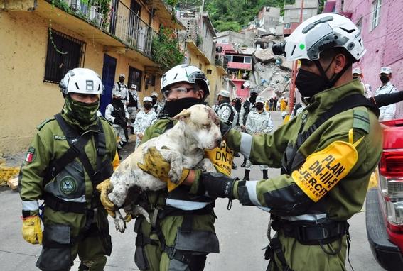 rescatan perro cerro del chiquihuite 1