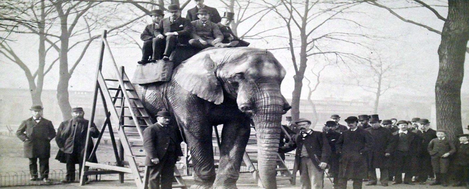 tragica-historia-de-jumbo-elefante-que-inspiro-a-disney