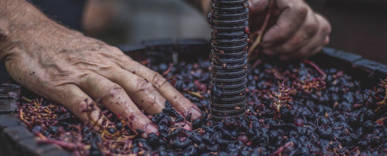 vino-mexicano-se-posiciona-entre-los-diez-primeros-en-el-concours-mondial-de-bruxelles