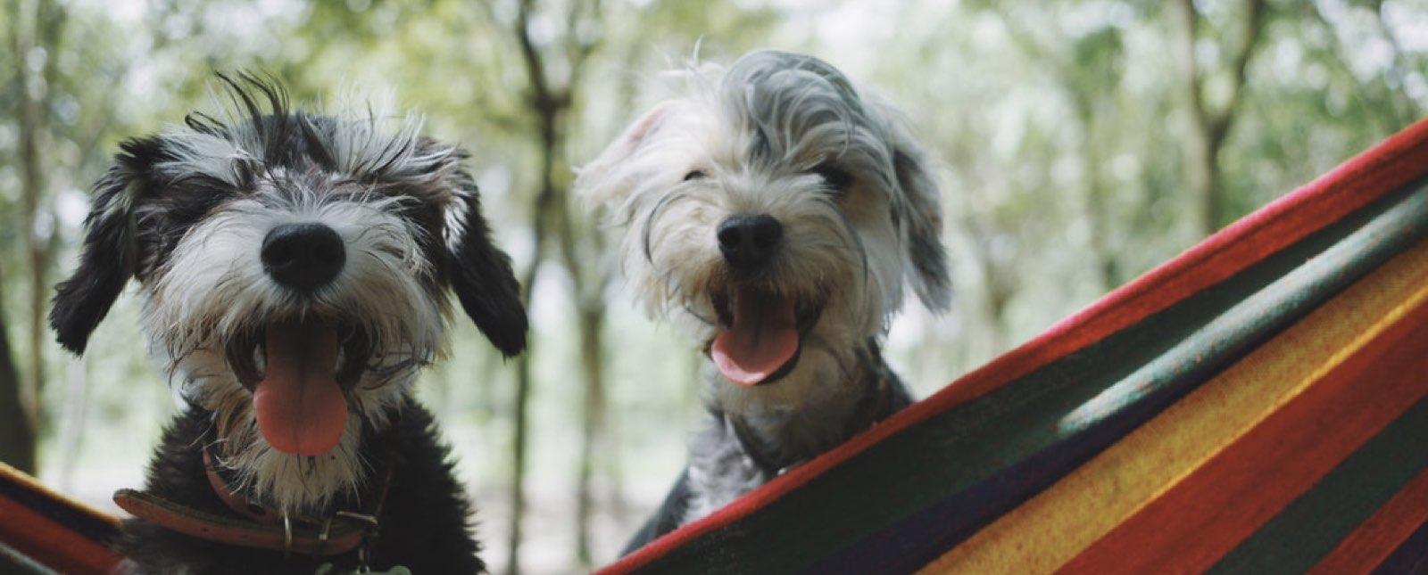 ciudades-petfriendly-en-donde-los-perros-son-bienvenidos