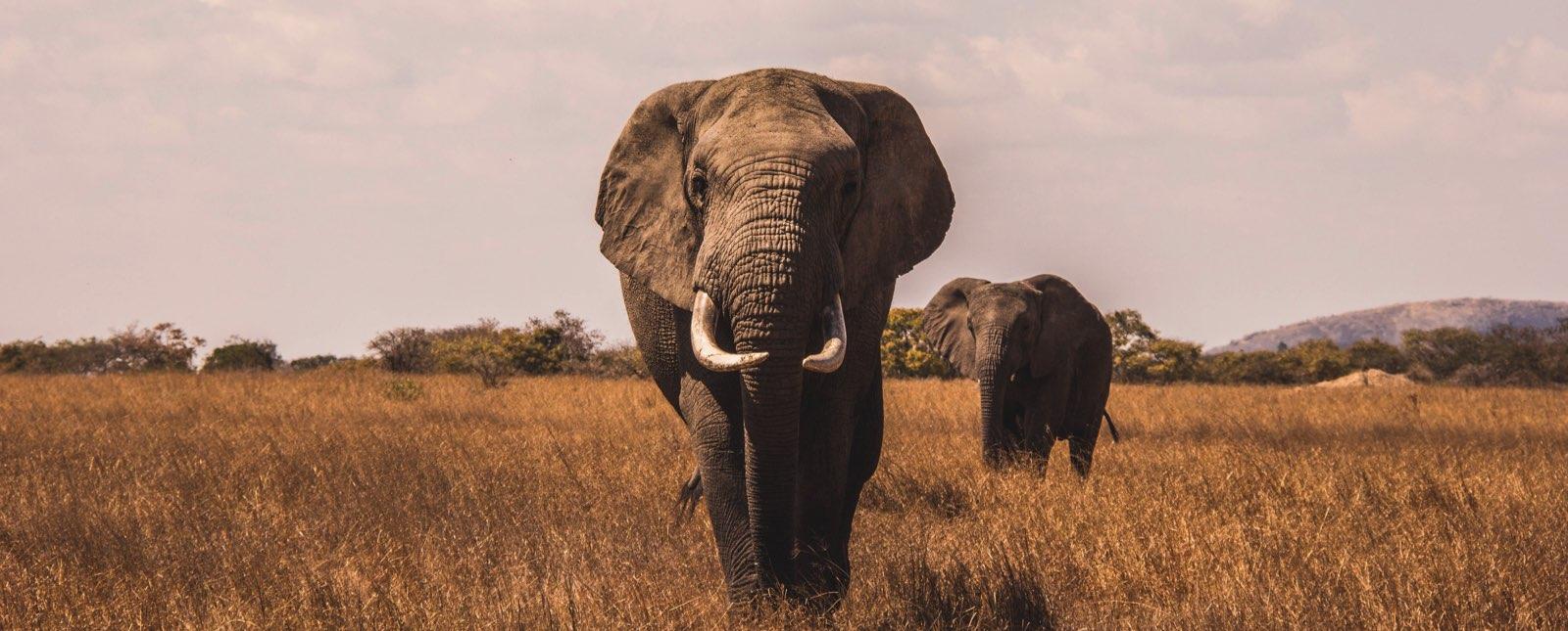 allan-savory-acabo-con-elefantes-reverdecer-la-tierra