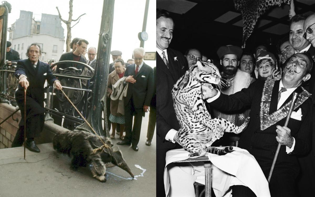 El animal que está en peligro extinción y que Dalí tristemente puso de moda