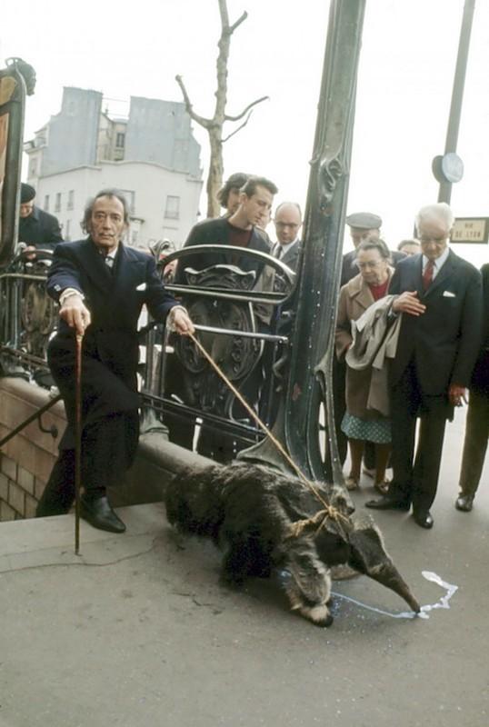 Salvador Dalí y su oso hormiguero