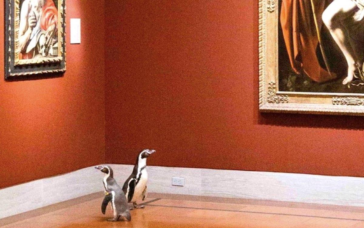 los-pinguinos-que-visitaron-un-museo-de-arte