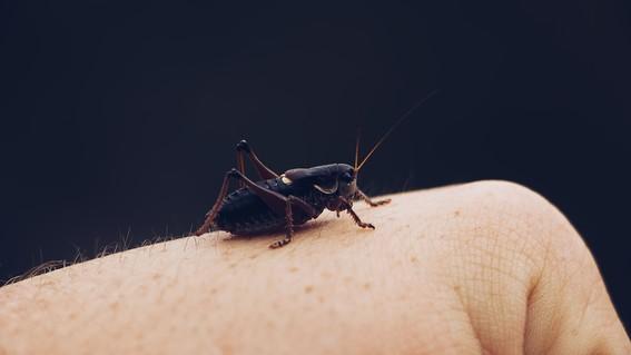 estudio advierte de extincion masiva de insectos por agricultura