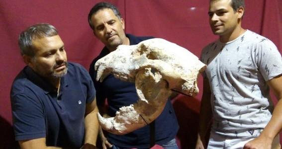 encuentran fosiles de oso gigante que vivio hace 700 mil anos
