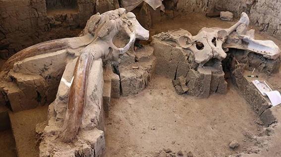 encuentran restos oseos de mamuts en tultepec