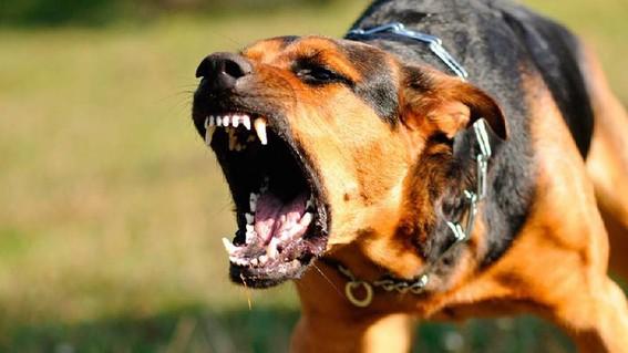 gasta cfe 93 mil pesos en ahuyenta perros para sus trabajadores