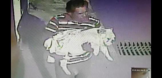 robo de mascotas en mexico
