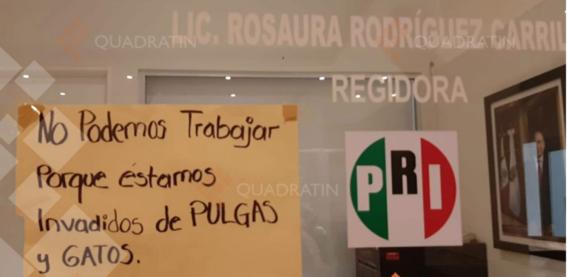 pulgas ratas y tlacuaches invaden oficinas del pri en acapulco