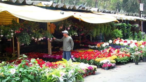 mercado de plantas de cuemanco