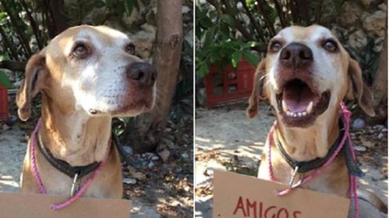 deko perrito vende postres para pagar sus  quimioterapias