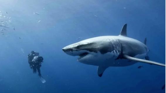 tiburones en mexico