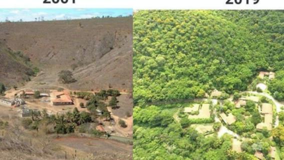 bosque reforestado en brasil