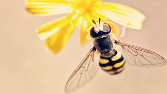 hay 2 mil especies de abejas en peligro de extincion en mexico