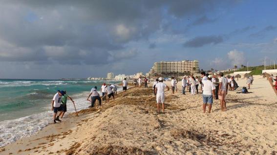 sargazo en cancun 2019