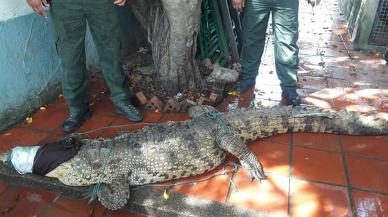rescatan miles de reptiles que terminarian siendo bolsas de mano