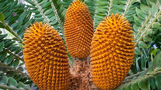 571especiesdeplantassehanextinguidoenlosultimos250anos