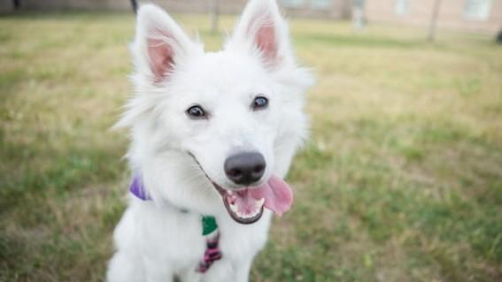 descubre como hacen los perros para enternecer a las personas y ganarse asi su afecto