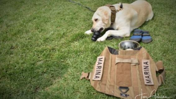 frida la extranable perrita que participo en el rescate de victimas del 19s de 2017 se jubilo en la unidad canina de la secretaria de marina