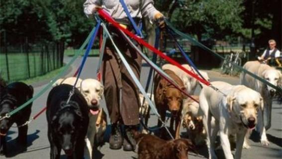 arresto y multas por pasear perros sin correa