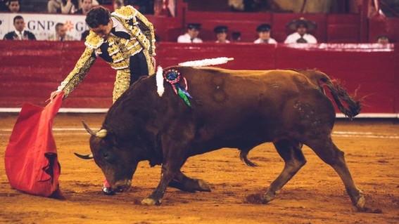 prohiben corridas de toros y peleas de gallos en quintana roo