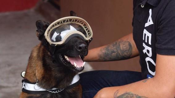 operan a chichi perro rescatista 19s