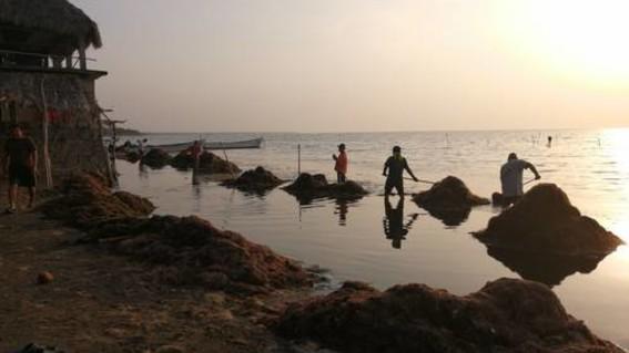 representantes de pescadores pidieron a las declarar emergencia debido a invasion de sargazo en zonas turisticas en la zona del istmo oaxaqueno