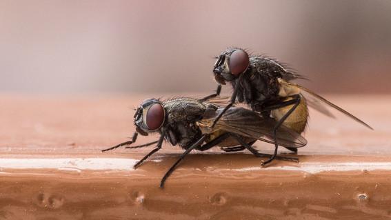 si has notado que durante el verano se multiplica la presencia de moscas en casi todo lados y te preguntas de donde han salido aqui te tenemos l