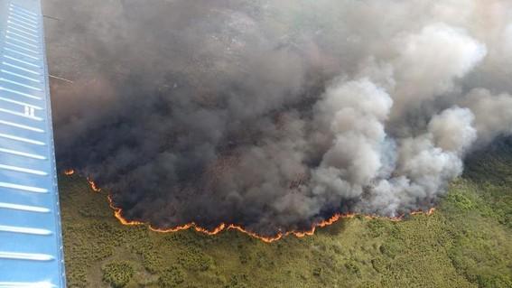 ¡dos mil hectareas de reserva natural se estan quemando en quintana roo