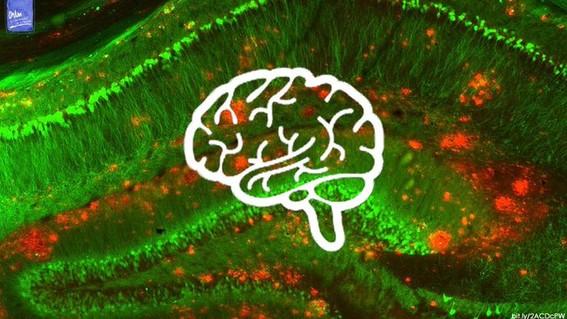 fuga de cerebros mexico