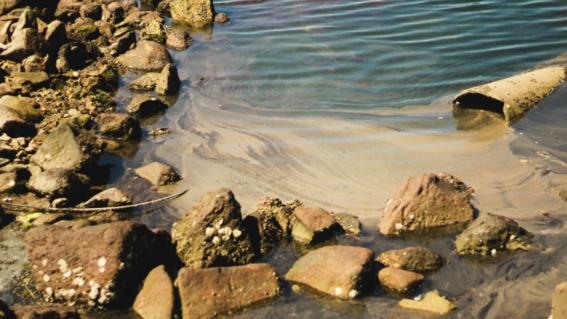 mar de cortes debera ser monitoreado permanentemente tras derrame