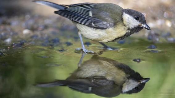 las especies pueden permanecer en su habitat de calentamiento siempre y cuando cambien lo suficientemente rapido para enfrentar el cambio climat
