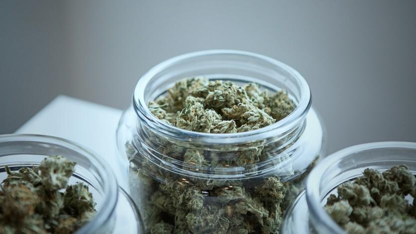 moléculas-analgésicas-en-el-cannabis-son-30-veces-más-potentes-que-una-aspirina