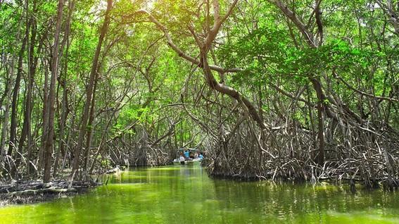 la destruccion de los manglares esta ocurriendo tres veces mas rapido debido a los cambios en los usos de suelo