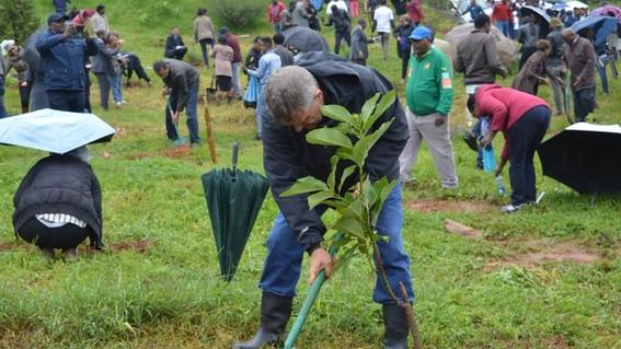 green legacy ethiopia