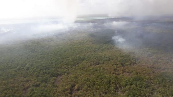 la conafor informo que el incendio forestal registrado en muyil parte de la reserva de la biosfera de sian ka´an ya fue controlado el 100 por ci