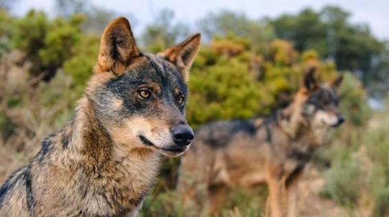 estados unidos aprueba de nuevo bombas de cianuro para matar animales salvajes