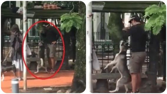 entrenador de perros detenido parque mexico