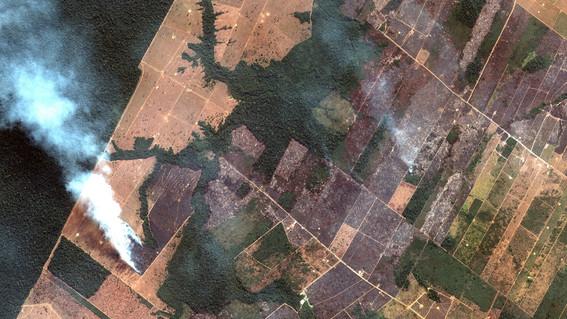 amazonas ecosia llueve en el amazonas