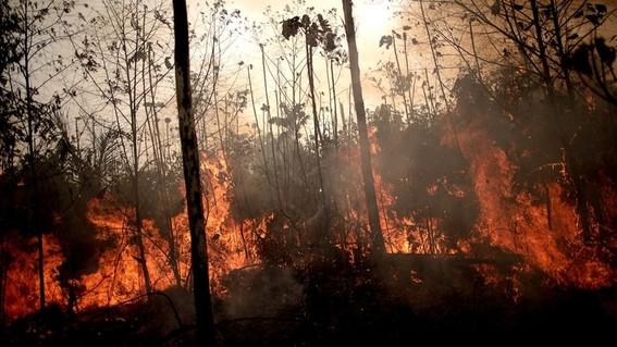 conoce cuales son los incendios activos detectados en america del sur asi como algunos datos  relevantes del fuego en la region