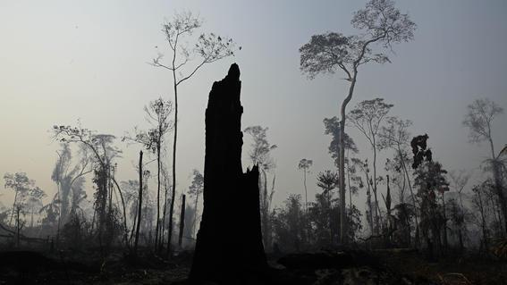 bernard arnault donara ayuda incendios amazonas