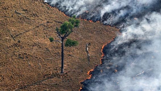 entre 20 y 40 anos tardara el amazonas en recuperarse tras incendio