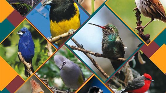 las autoridades dedicadas al cuidado del medio ambiente en la cdmx descubrieron 19 nuevas especies de aves en un area natural protegida de la alc