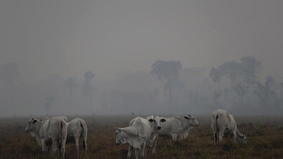 animales refugio incendio amazonas